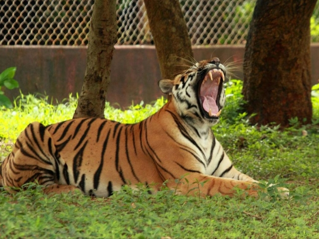 Nandankanan Zoological Park - Odisha Photo Gallery - Bhubaneswar Cab Rental