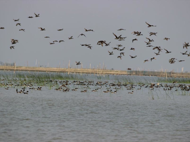 chilika lake - Odisha Photo Gallery - Bhubaneswar Cab Rental