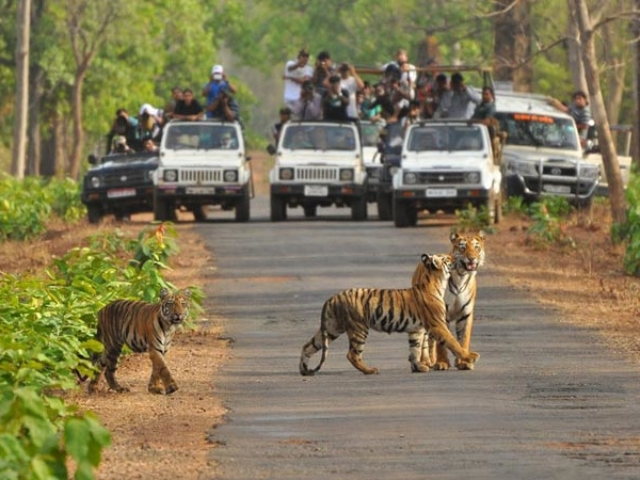 Satkosia Tiger Reserve- Odisha Photo Gallery - Bhubaneswar Cab Rental